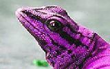 Розовый хамелеон: Пятнашки